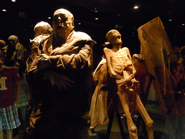 ミイラ博物館に展示されているミイラ