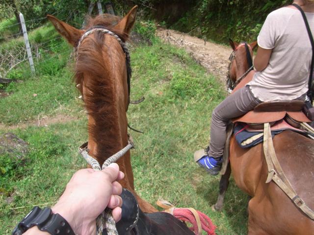 馬の上から撮影