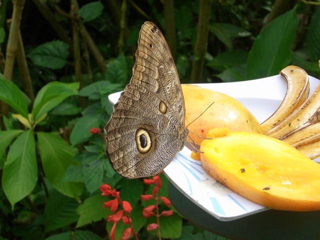 なんて名の蝶ですかね?