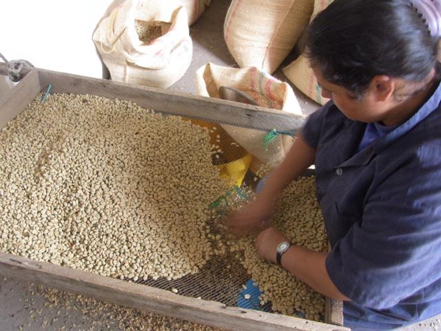 コーヒー豆の選別をしているシーン
