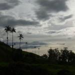 ココラ渓谷に群生するヤシの木